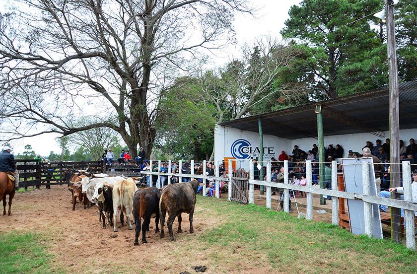 Bella Vista afirma el espíritu ruralista con un Remate de Terneros