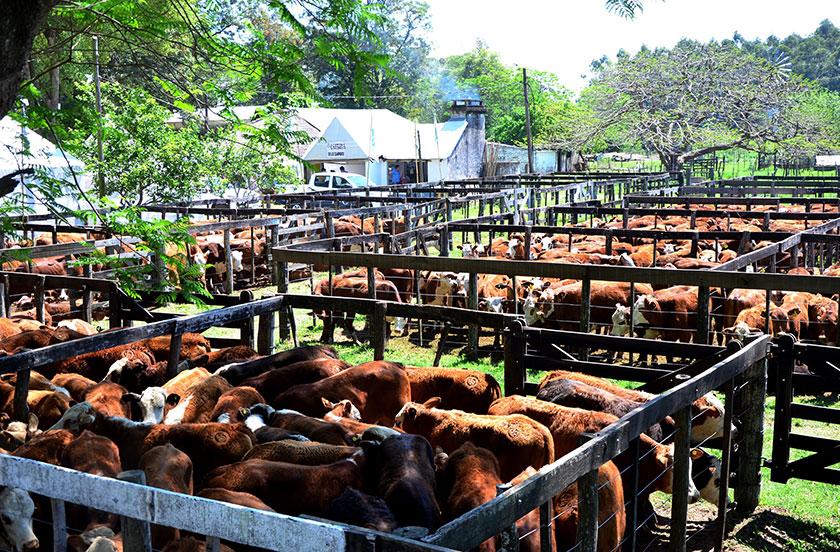 Satisfacción por los precios de la hacienda en Bella Vista