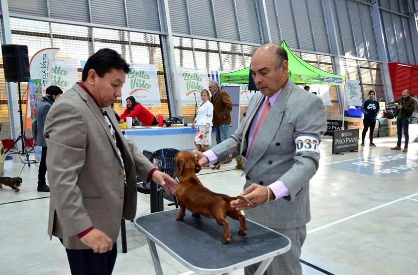 Bella Vista fue sede de una imponente Expo Canina