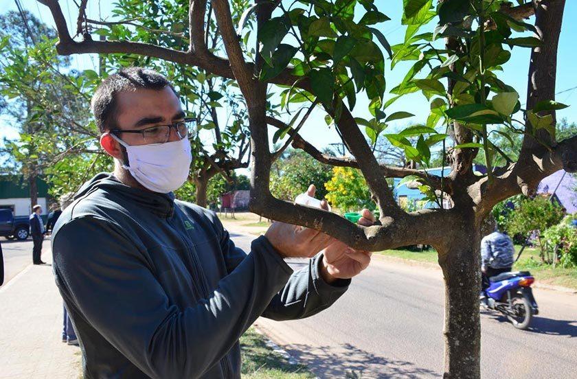 Liberan insecto para combatir el HLB